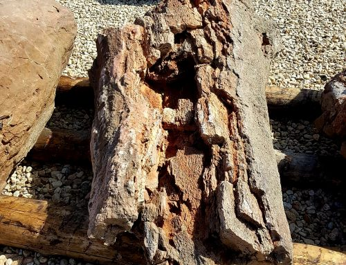 – Los Troncos Fósiles de Arevalillo de Cega. Segovia.