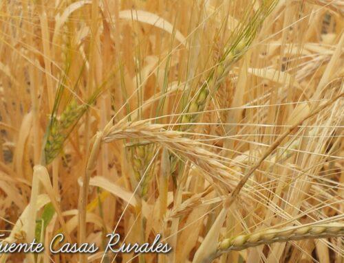 – Ofertas mes de julio. Casas rurales La Fuente. Segovia.