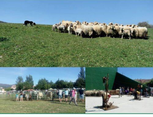 – XIII Feria del Esquileo. Riaza 2019.