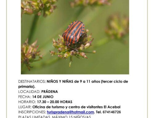 – Taller de insectos para niños.