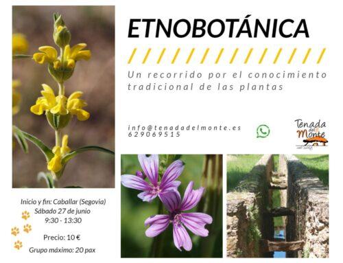 – Salida etnobotánica en Caballar.