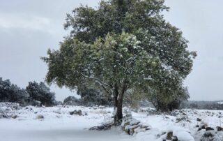 Rutas Guiadas por el Parque Nacional Sierra Norte de Guadarrama
