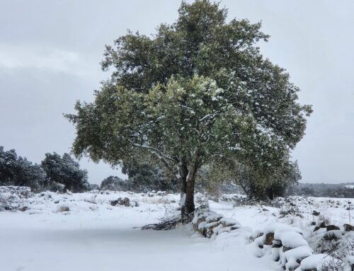 – Rutas Guiadas por el Parque Nacional Sierra Norte de Guadarrama.